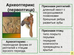 Палеонтологические ряды Палеонтологические ряды – это ряды ископаемых форм,