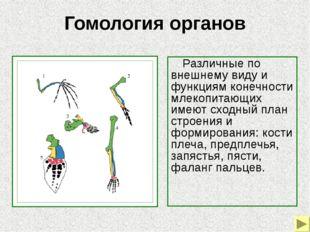 Гомология органов Гомология слуховых косточек позвоночных 1–череп костной р