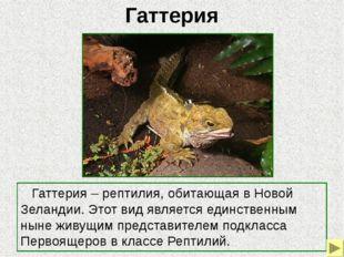 Латимерия Латимерия (целокант) – кистеперая рыба, обитающая в глубоководных у