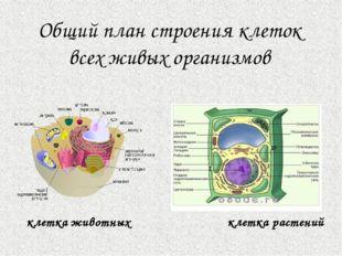 Ископаемые переходные формы Ископаемые переходные формы – формы организмов, с