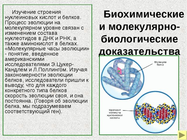 Медленно изменяются, то есть являются консервативными уникальные гены, кодиру...