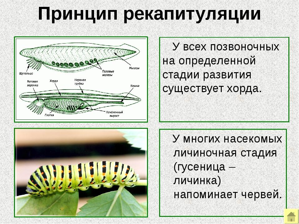 Биогеографические доказательства Сравнение флоры и фауны Реликты