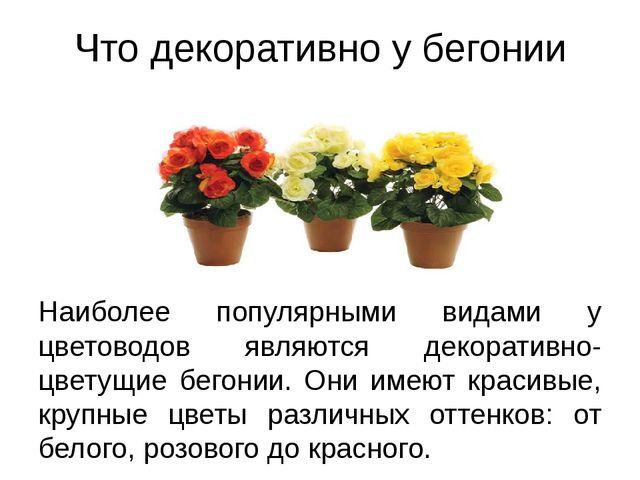 Что декоративно у бегонии Наиболее популярными видами у цветоводов являются д...