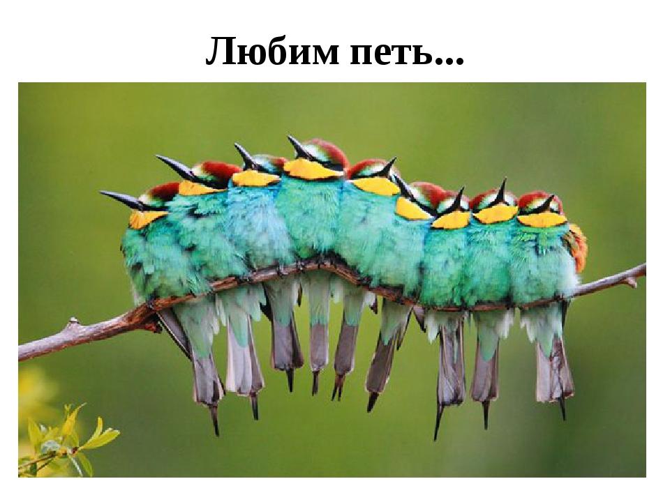 Любим петь...