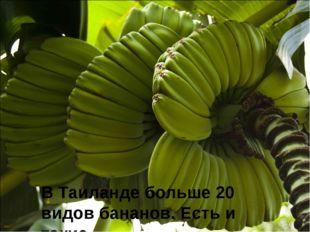 В Таиланде больше 20 видов бананов. Есть и такие. В Таиланде больше 20 видов