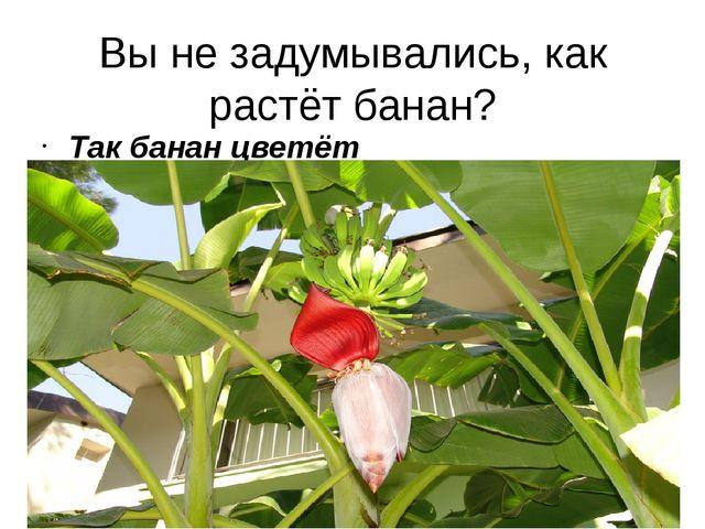 Вы не задумывались, как растёт банан? Так банан цветёт