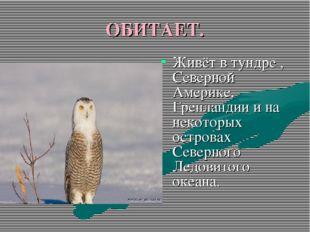 ОБИТАЕТ. Живёт в тундре , Северной Америке, Гренландии и на некоторых острова