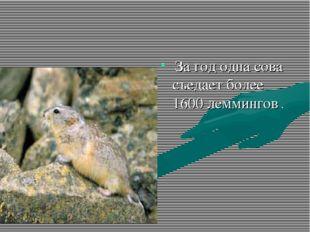За год одна сова съедает более 1600 леммингов .