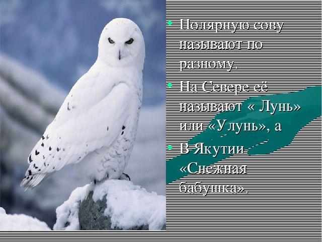 Полярную сову называют по разному. На Севере её называют « Лунь» или «Улунь»,...
