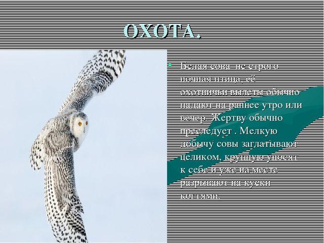 ОХОТА. Белая сова не строго ночная птица, её охотничьи вылеты обычно падают н...