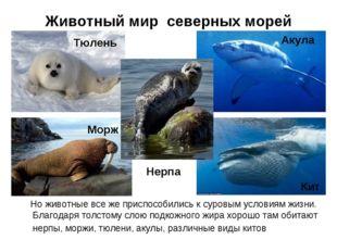 Животный мир северных морей Но животные все же приспособились к суровым услов