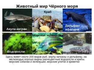 Животный мир Чёрного моря Здесь живет около 200 видов рыб, акулы катраны и де