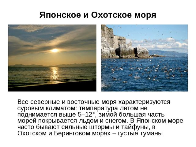 Японское и Охотское моря Все северные и восточные моря характеризуются суровы...
