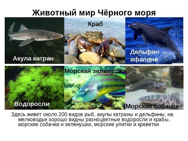 Животный мир Чёрного моря Здесь живет около 200 видов рыб, акулы катраны и де...