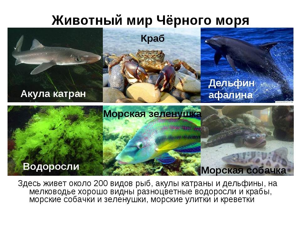 https://ds03.infourok.ru/uploads/ex/10d8/0005b627-3c1eb5ae/img7.jpg