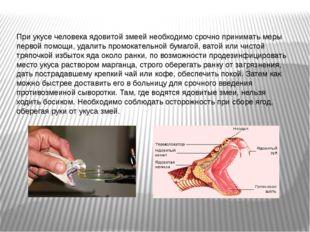 При укусе человека ядовитой змеей необходимо срочно принимать меры первой пом