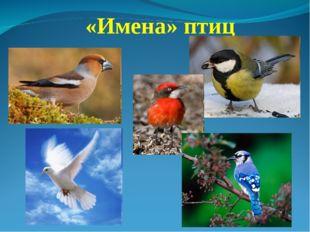«Имена» птиц
