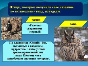 Птицы, которые получили свое название по их внешнему виду, повадкам. «Гал»-по