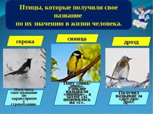 Птицы, которые получили свое название по их значению в жизни человека. сорока