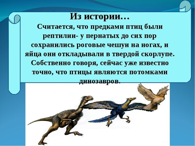 Из истории… Считается, что предками птиц были рептилии- у пернатых до сих пор...