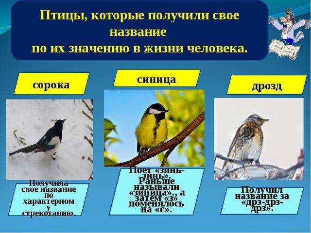 Птицы, которые получили свое название по их значению в жизни человека. сорока...