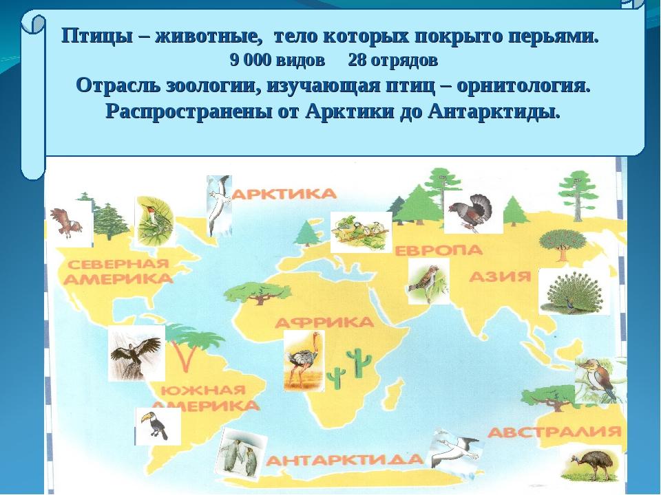 Птицы – животные, тело которых покрыто перьями. 9 000 видов 28 отрядов Отрасл...