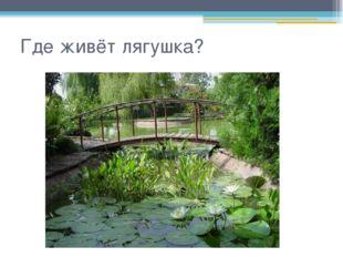 Где живёт лягушка?