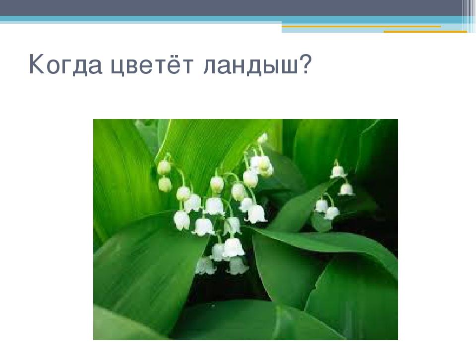 Когда цветёт ландыш?