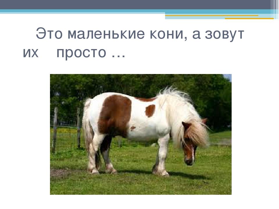 Это маленькие кони, а зовут их просто …