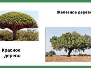 Красное дерево Железное дерево