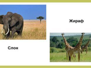 Слон Жираф