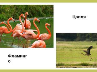 Фламинго Цапля