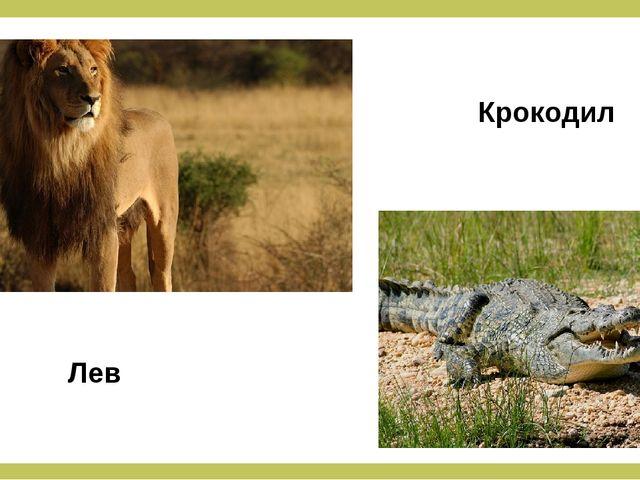 Лев Крокодил