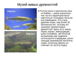 Музей живых древностей В России около 3 миллионов озер, но Байкал – самое вну