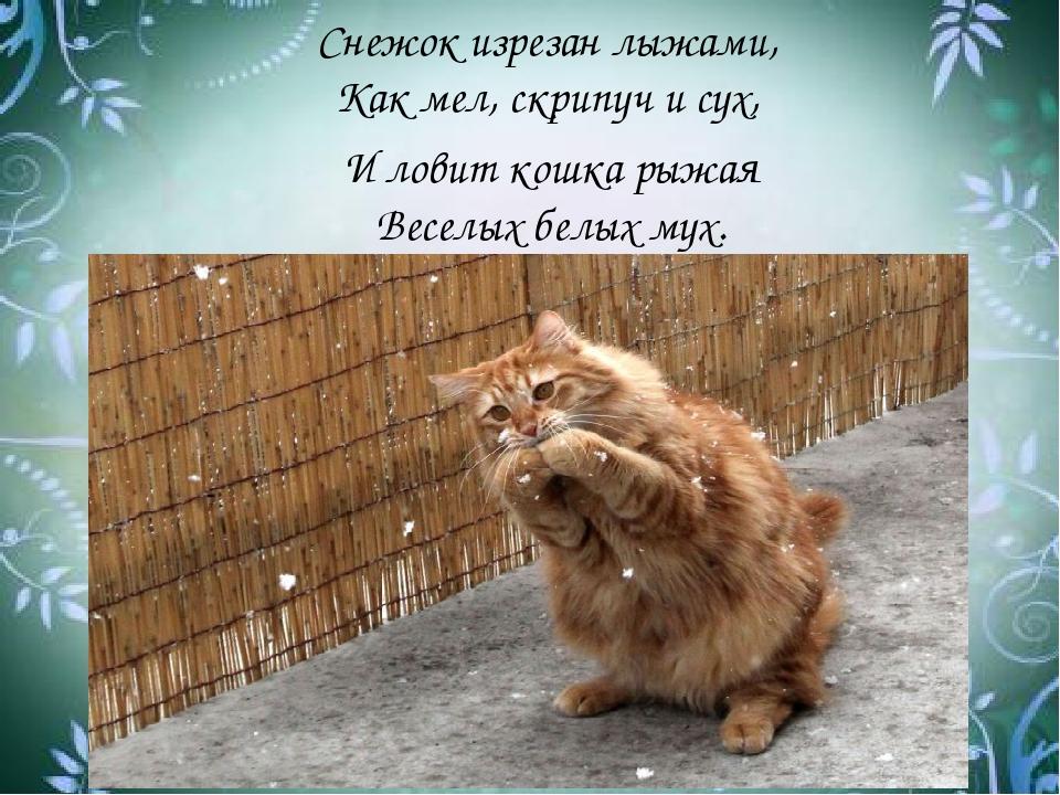 Снежок изрезан лыжами, Как мел, скрипуч и сух, И ловит кошка рыжая Веселых бе...