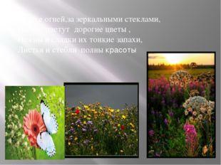 В блеске огней,за зеркальными стеклами, Пышно цветут дорогие цветы , Нежны и