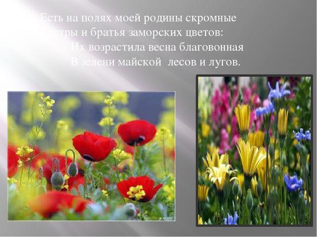 Есть на полях моей родины скромные Сёстры и братья заморских цветов: Их возр...