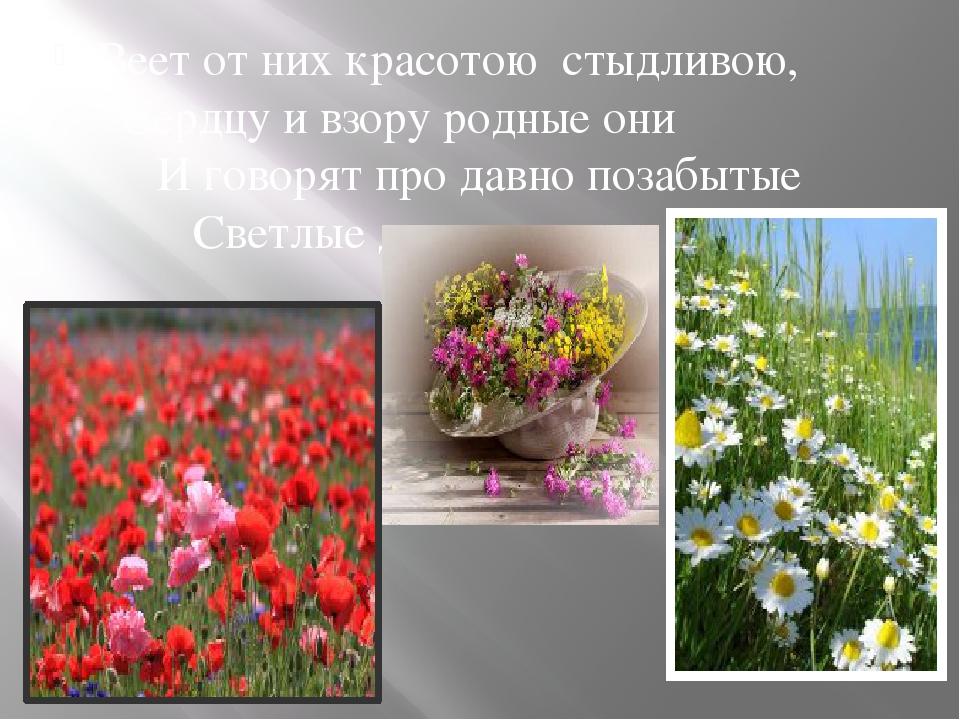 Веет от них красотою стыдливою, Сердцу и взору родные они И говорят про давн...