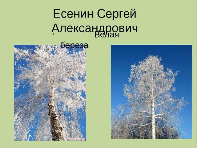 Есенин Сергей Александрович Белая береза