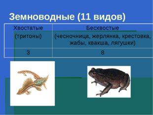 Земноводные (11 видов)