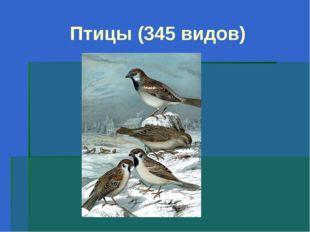 Птицы (345 видов)