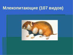 Млекопитающие (107 видов)