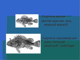 Скорпена малая (малая красная, ёрш морской малый) Скорпена черноморская (ёрш