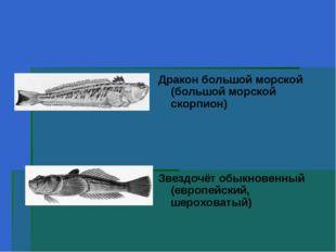 Дракон большой морской (большой морской скорпион) Звездочёт обыкновенный (ев