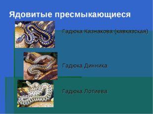 Ядовитые пресмыкающиеся Гадюка Казнакова (кавказская) Гадюка Динника Гадюка Л