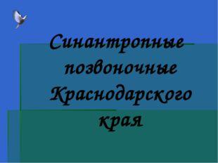 Синантропные позвоночные Краснодарского края