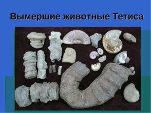 Вымершие животные Тетиса
