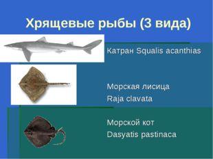 Хрящевые рыбы (3 вида) Катран Squalis acanthias Морская лисица Raja clavata М