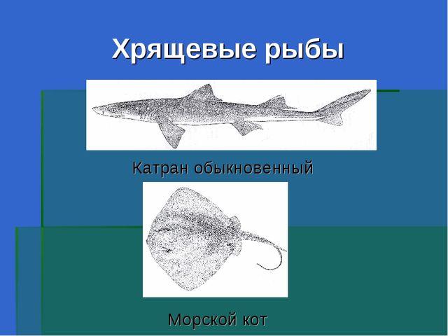 Хрящевые рыбы Катран обыкновенный Морской кот