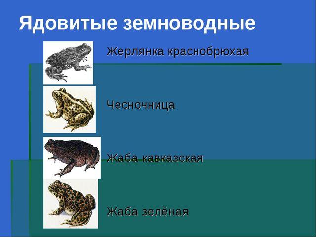 Ядовитые земноводные Жерлянка краснобрюхая Чесночница Жаба кавказская Жаба зе...